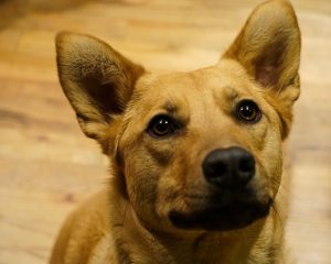 About Us - Colorado Canine Rescue